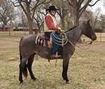 Basic Badger Boots Quarter Horse