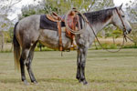 Bridlebit Brown Girl Quarter Horse Consignment