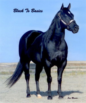 Black To Basics