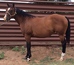 Black to Heaven Quarter Horse