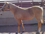 Ms Becaco Paydun Quarter Horse Consignment