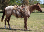 ELS Thats My Cowgirl Quarter Horse Consignment