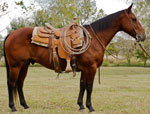 Rescates Lil Hot Peppy Quarter Horse Consignment