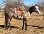 Rescate Country Quarter Horse