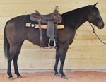 Miss Basic Affair Quarter Horse Consignment