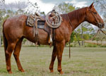 Royal Gun Shine Quarter Horse Consignment