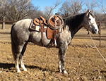 Colonel Rescate Quarter Horse