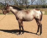 Rescate Moonlight Quarter Horse