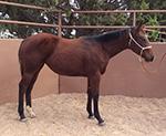 Sixsgunsprivateaffair Quarter Horse