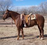 Spanky Quarter Horse Consignment