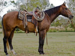 Rescate Fancy Gun Quarter Horse Consignment