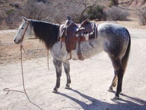 Annies Whiskey Quarter Horse