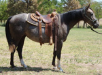 Lone Rosie Freckles Quarter Horse Consignment