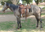 Eyesa Rescate Stead Quarter Horse Private Treaty