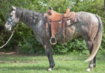 Eyesa Rescate Special Quarter Horse Private Treaty