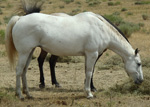 Natural Country Quarter Horse Private Treaty