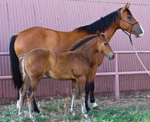 Red Hot Heaven Quarter Horse Broodmare