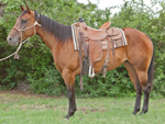 Rescate Darlin Quarter Horse Private Treaty