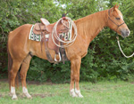 Rescate Frosty Boots Quarter Horse Consignment