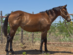 Smart N Purdy Quarter Horse Consignment