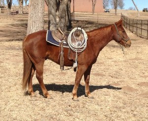 Mr Peppy Dee Lena Quarter Horse Consignment