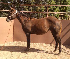 Pick A Purdy Rose Quarter Horse