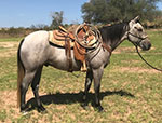 Rescate Sixshooter Quarter Horse