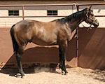 Blazing Sixgun Quarter Horse
