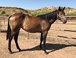 Easy Breezy Pick Quarter Horse