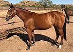 Red Hot Misty Rose Quarter Horse